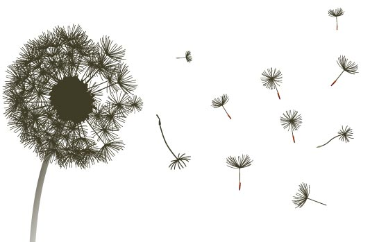 dandelion-graphic